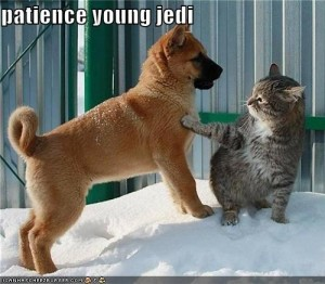 Patience Young Jedi